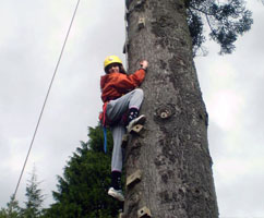 Tree climbing at Ghyll Head